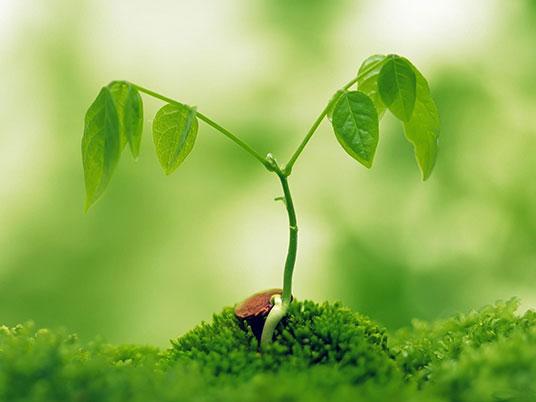 Уход и выращивание комнатных и садовых растений.