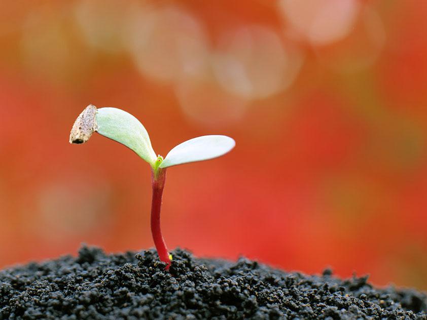 Как приготовить почву для растений.