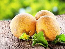 дыня в теплице, выращивание дыни